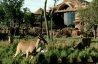 Orlando - 4* Disney's Animal Kingdom Lodge