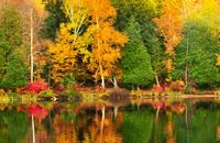 Canada: Forests & Lakes of Ontario