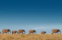 South Africa: Garden Route & Safari