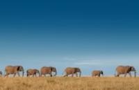 South Africa: Garden Route & Safari