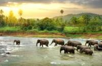 Sri Lanka: Essential Sri Lanka