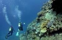 Australia: Great Barrier Reef in Depth