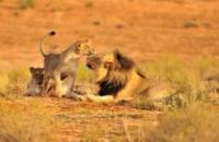 Africa: Cape, Kruger & Falls