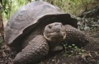 Ecuador: Classic Galapagos - Central South Islands
