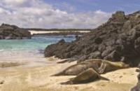 Ecuador: Galapagos Land & Sea - Central Islands