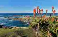 South Africa: Luxury Garden Route & Safari