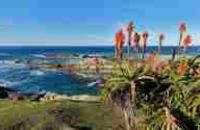 South Africa: Luxury Garden Route & Safari