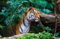 India: Glimpses of Taj & Tiger