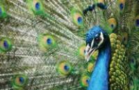 India: Unexplored Central India Wildlife