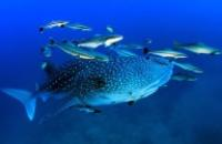 Australia: Reef to Reef
