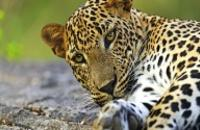 Sri Lanka: Unforgettable Sri lanka
