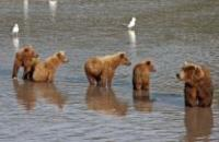 Canada: Whales, Bears & Vancouver Island