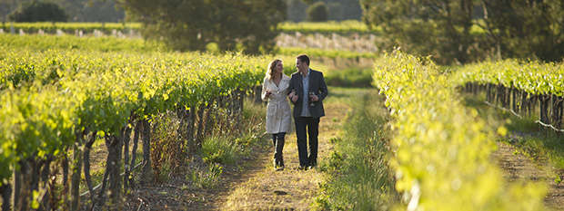 Couple walking through a vineyard in the Barossa Valley