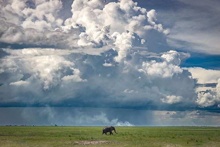 Elephants Botswana Ross Jennings