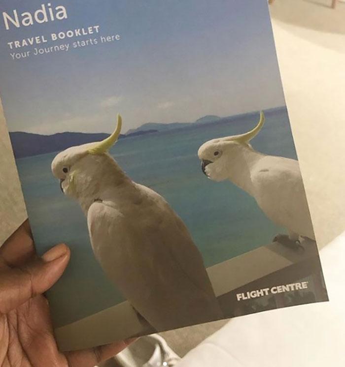 Cockatoos on itinerary brochure Nadia Williams