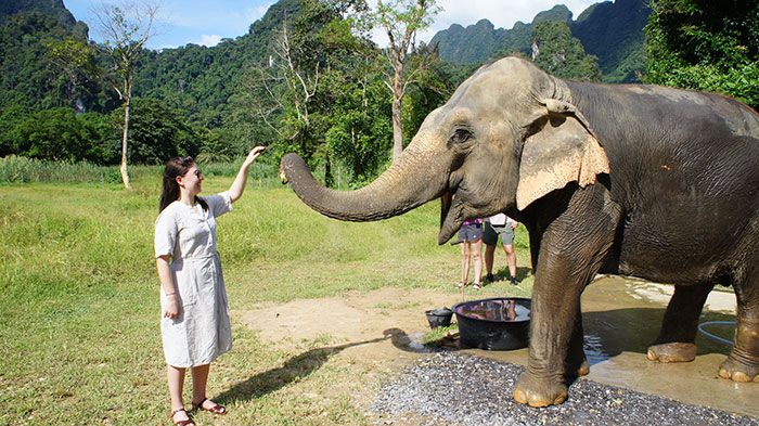 Feeding at elephant at Elephant Hills