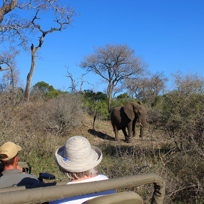 Elephant, South Africa, Lizzie Lacey-Brennan
