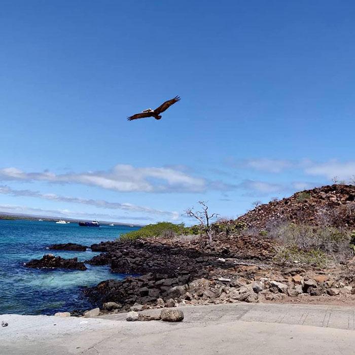 Galapagos Islands bird Jessica French