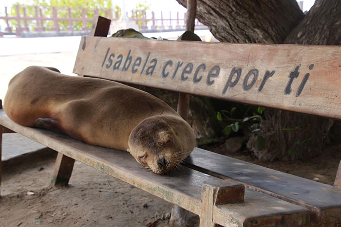 Galapagos sea lion Jessica French