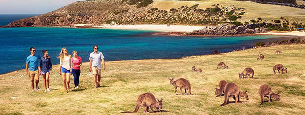 People walking by kangaroos on Kangaroo Island