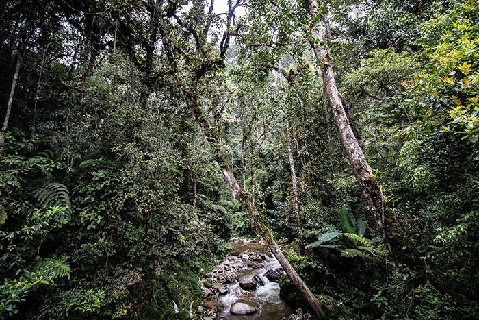 Malaysian jungle Richard Collett