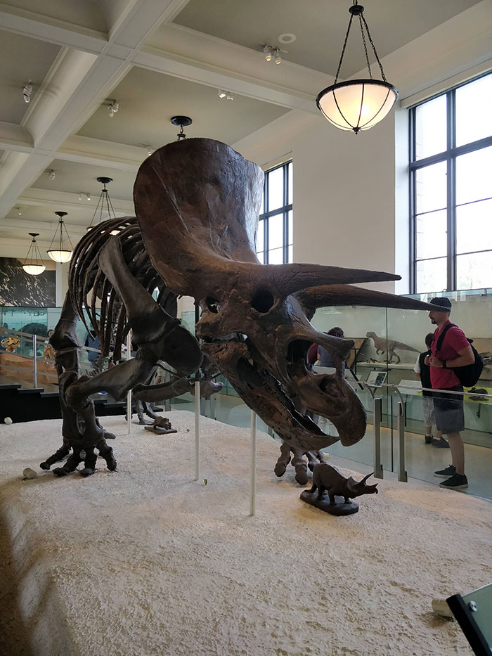 Dinosaur Museum of Natural History New York Angela Griffin