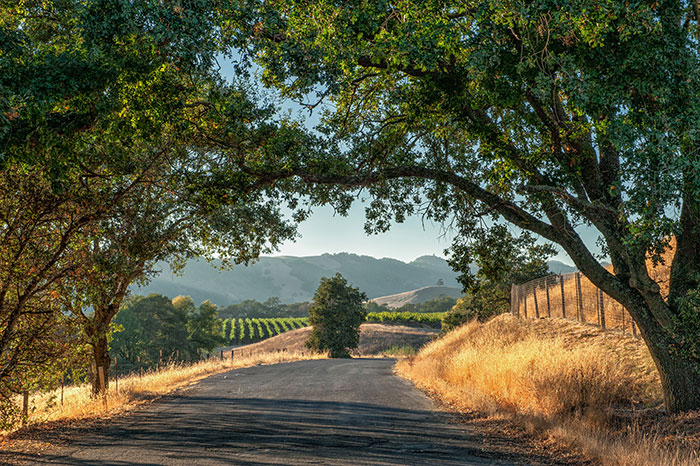 Road in Sonoma Valley, USA