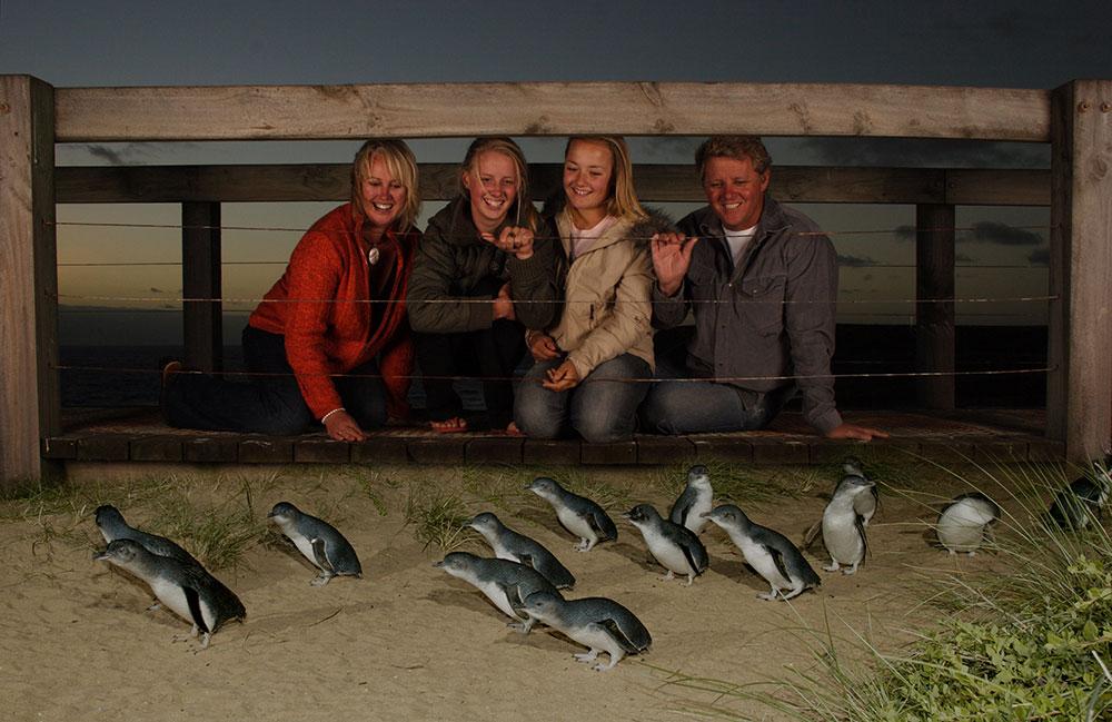 Phillip Island penguins, Victoria