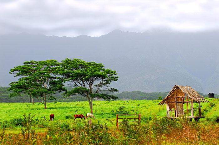Kauai Ranch, Hawaii