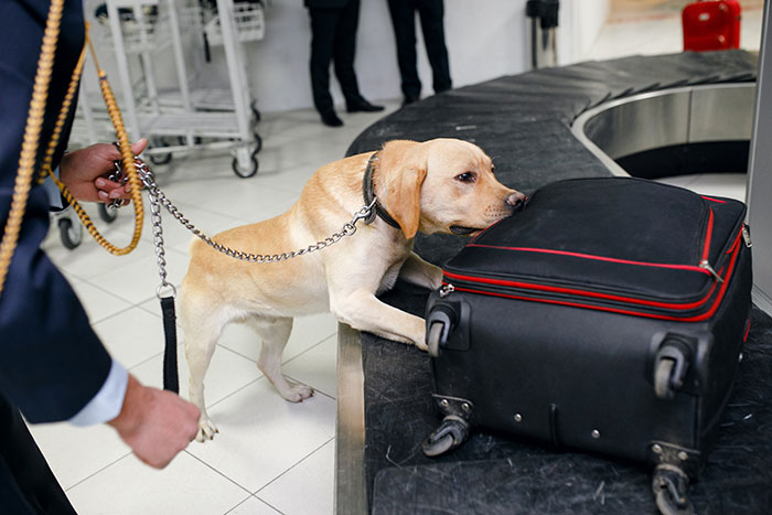Sniffer dog at the airport