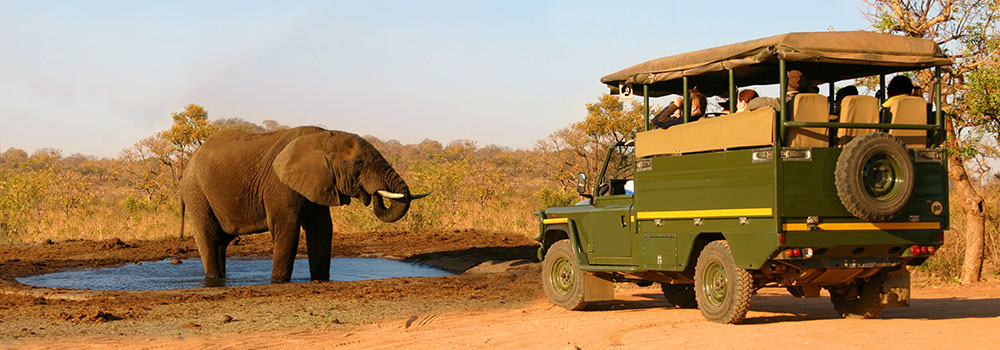 Spotting an elephant on safari in Africa