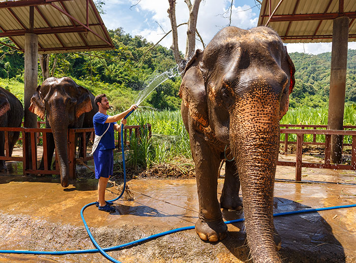 Elephants being washed
