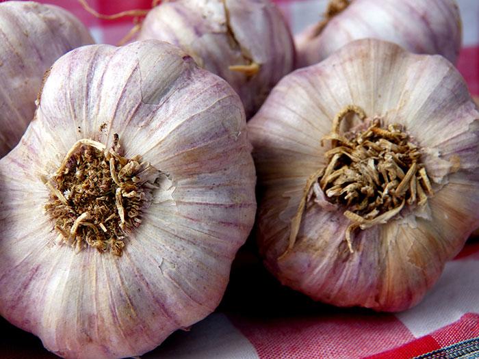 Garlic, Gilroy