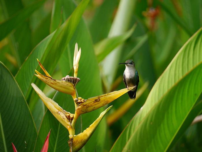 Hummingbird, Casa Corcovado, Costa Rica (image: Alexandra Cronin)