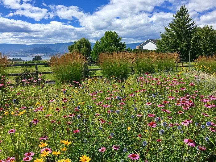 Lavendar and herb farm, Kelowna, British Columbia