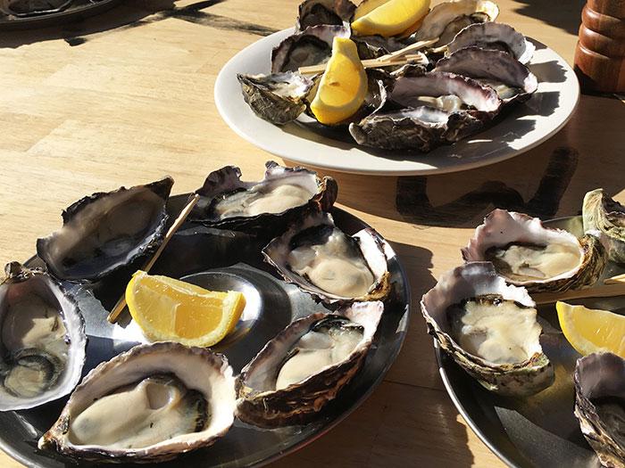 Oysters, Tasmania