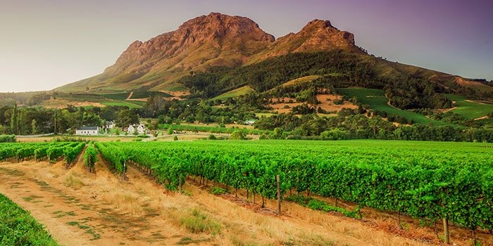 Wine regions South Africa