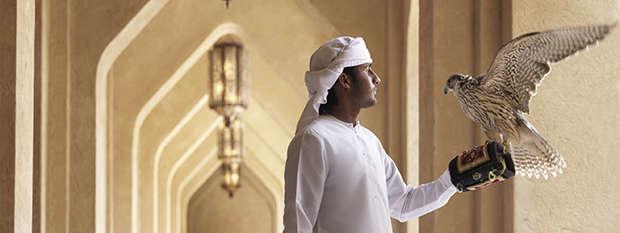 Falconer Abu Dhabi