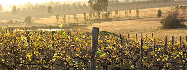 Sunset over vineyards in the Hunter Valley
