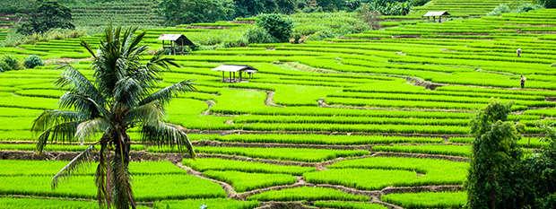 Terrace rice fields in Mae Chaem in Chiang Mai