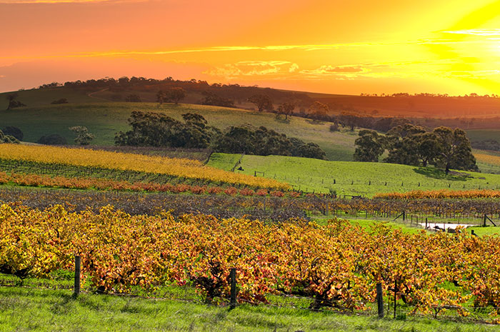 Sunset over the Barossa Valley