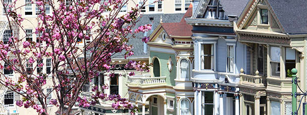 Cherry blossoms in front of the Painted Ladies in San Francisco