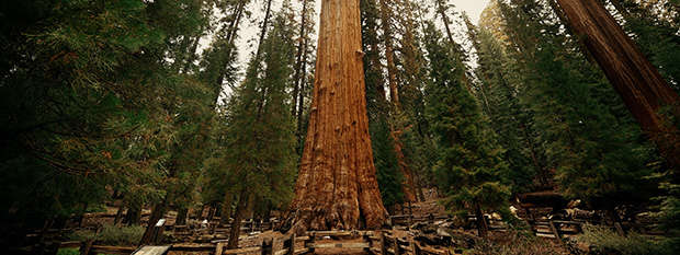 The General Sherman tree at Sequoia National Park