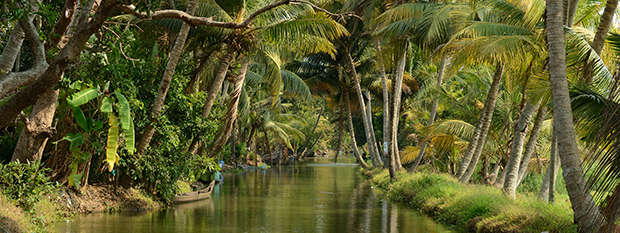 A palm tree lined canal in Kerala