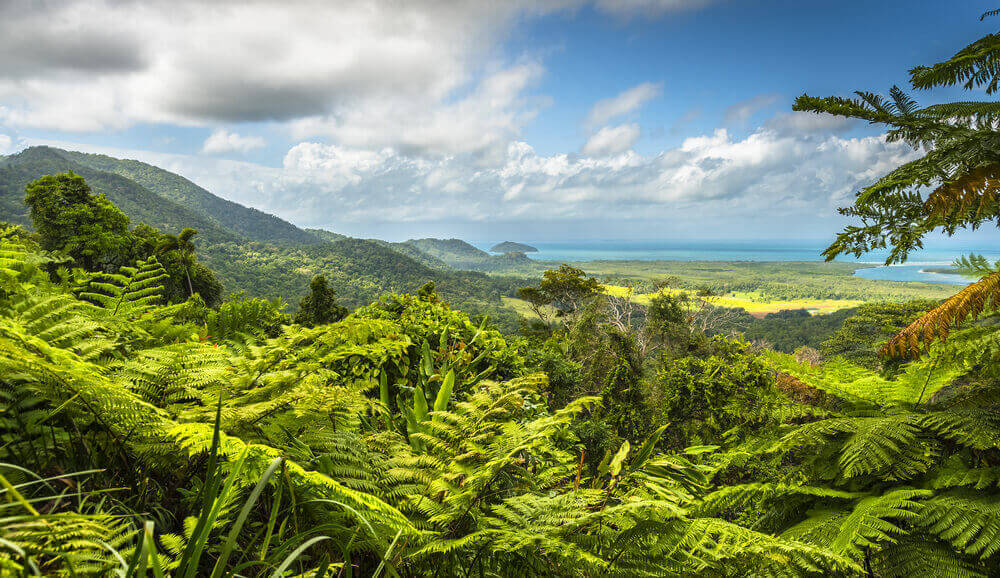 Daintree Rainforest Great Barrier Reef