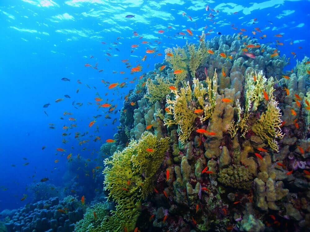 Underwater Great Barrier Reef