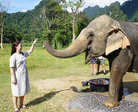 Feeding at elephant at Elephant Hills
