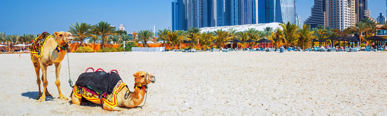 All Dubai