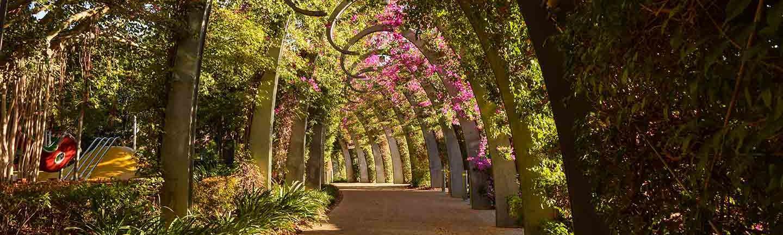 Brisbane Arbor