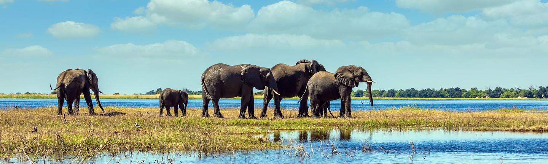 Elephants, Chobe National Park, Botswana